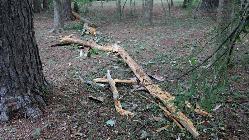Sometime overnight, about 3/4 of what remained of the tree broke off and fell.