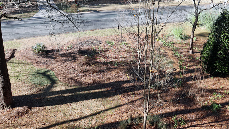 This isn't the ideal time to take yard pics because everything is asleep for the winter.  But the lack of leaves on the trees makes the outline easier to see.