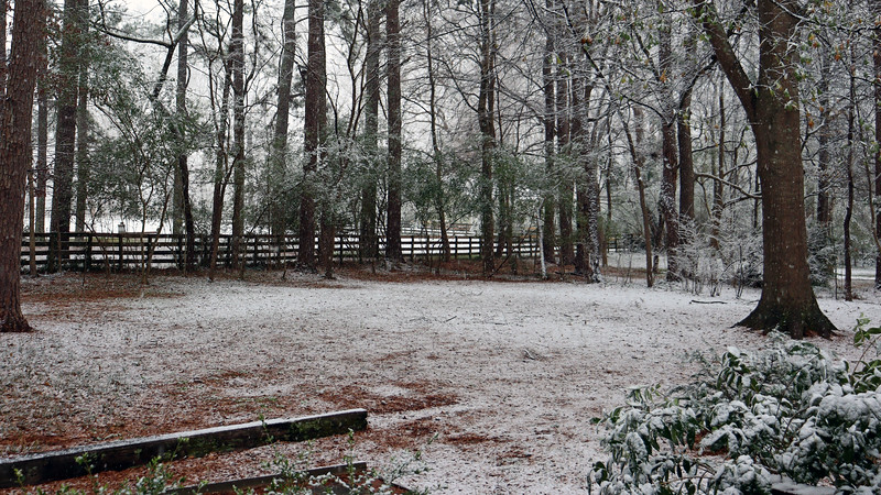 I headed to the backyard to find a dusting of accumulation under the thick tree cover.