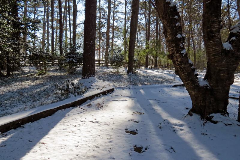Snow in Athens, Georgia.