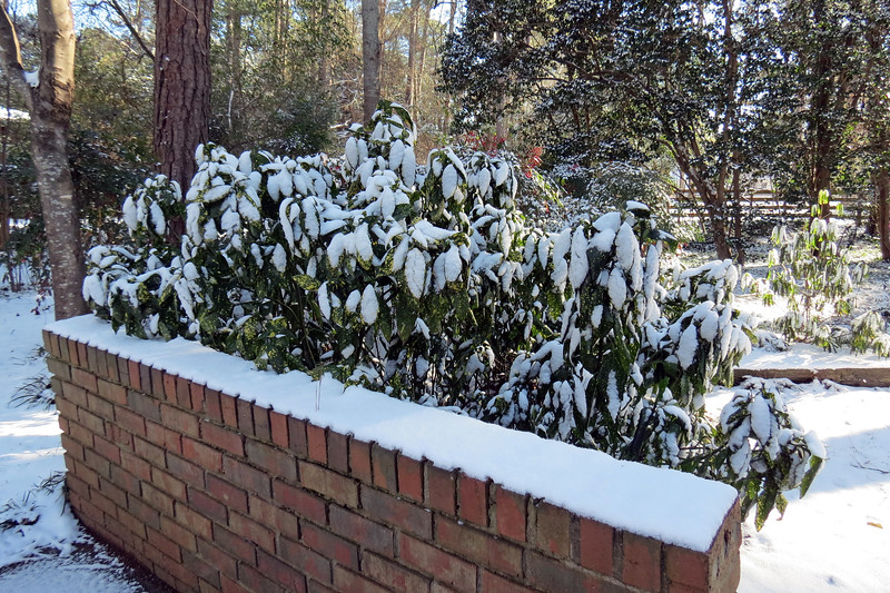 Some of my plants seem to like winter as much as I.