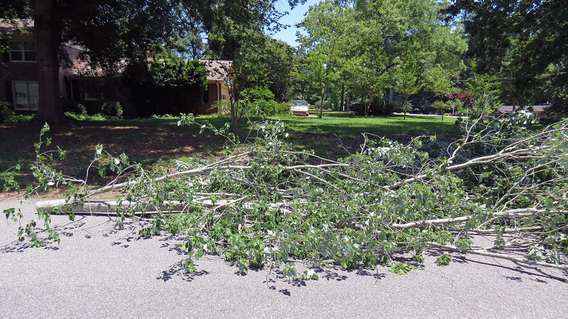 This branch was large enough to block the entire roadway.