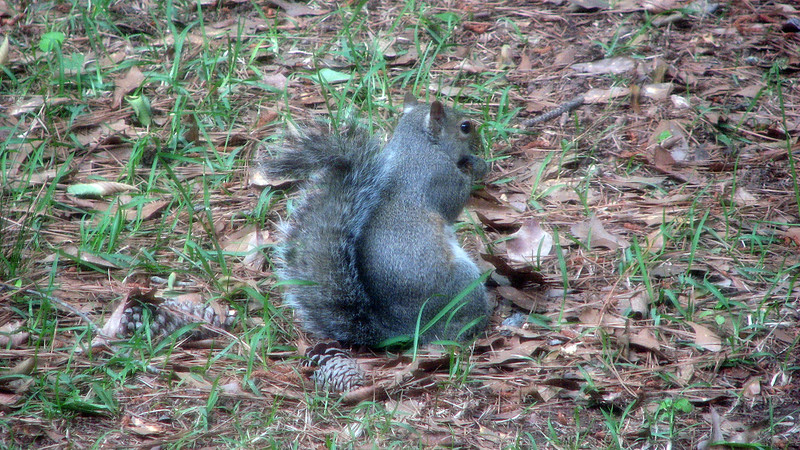 I would later discover that we had A LOT of squirrels in our yard.