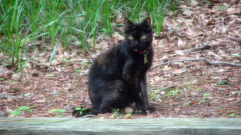 I would also later discover that a lot of the cats in the neighborhood seemed to gather in my yard.