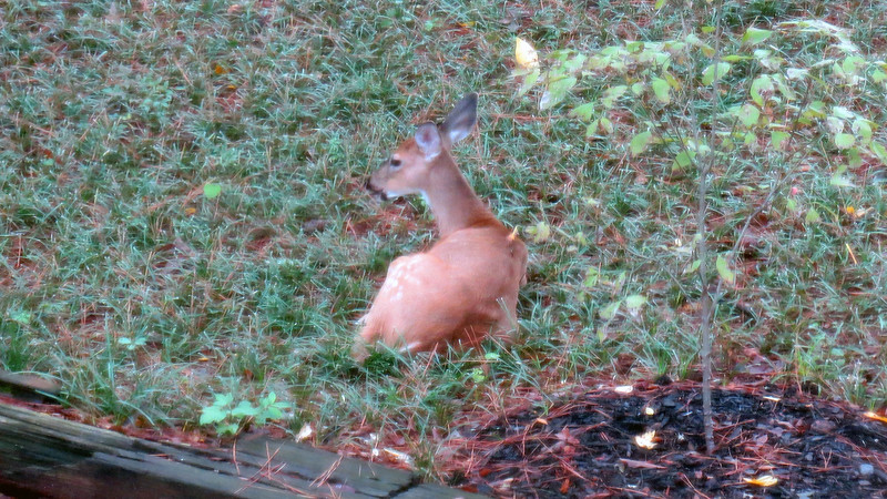 I'm not sure what's happening as of late.  But my back yard appears to be the place to hang out and relax.