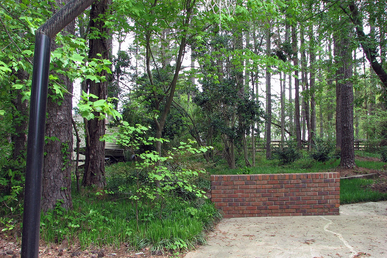 There are also some wild plants growing in the side yard next to the driveway.