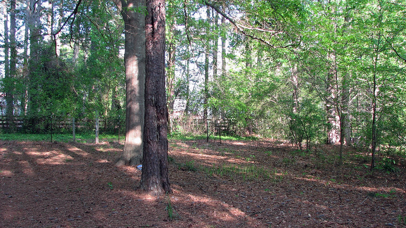 The area behind the dog enclosure and the fence behind it looks like it is pretty overgrown.
