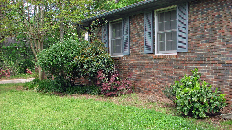 The front of the house looked nice.  There is something dead in the open area next to the loropetalum.