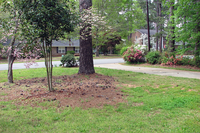 When my wife and I decided to look seriously at this house, we revisited a few more times.  The front yard looked like it needed some maintenance work.  But overall, it was quite good.  The azaleas were blooming and looked nice, but extremely overgrown, like nothing had been done to them in a long while.