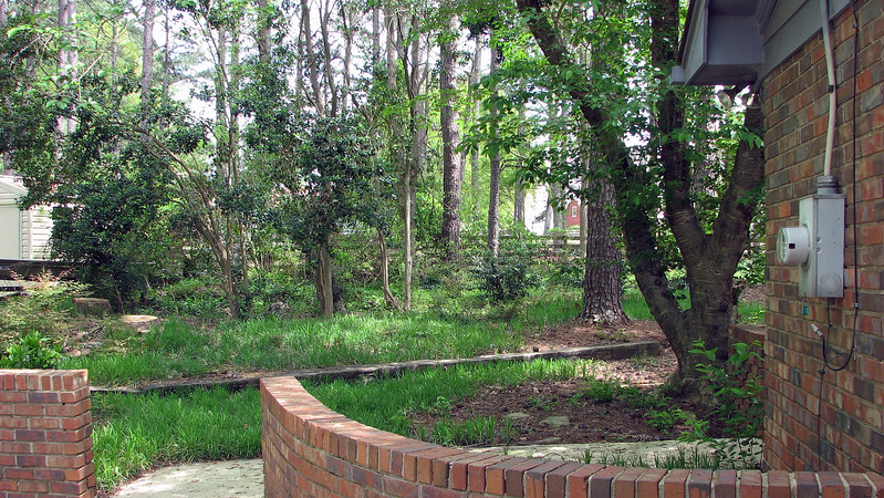 It looks like a large tree was recently cut down on the left side of the photo.  There are a lot of pieces of bark all over the ground in that area.