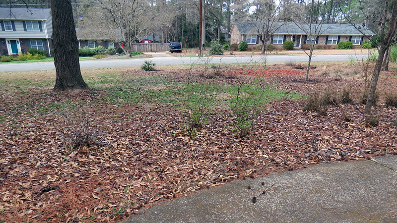 But by the time winter ends, those three colors all seem to blend together.  What was once an alternating pattern of red/black/brown eventually becomes one large pile of pine needles and leaves.