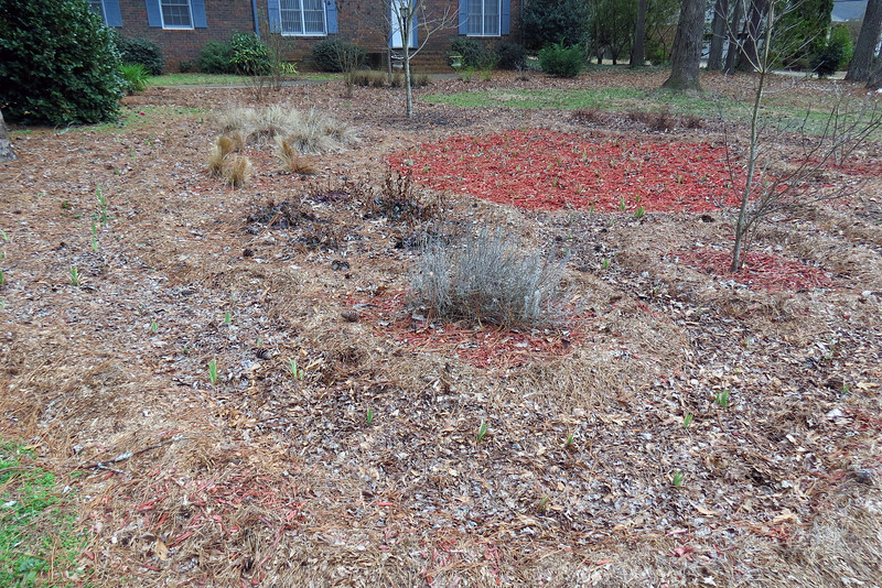 That area actually got a fresh layer of red mulch at the end of last season.  Digging up and dividing the irises removed all of the old mulch in the center of the design.  I added a fresh layer after I finished the project not only to replenish what I removed, but also to give me an idea of what the new design, which represented a significant change from the years prior, would look like.  More on that later.