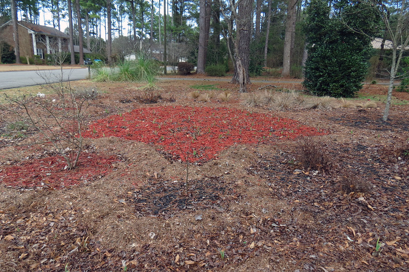That means every yard work season begins the same way – with an intense round of cleanup.  This year was no different.  The biggest difference this year involved the large area in the center of the design that still sported its bright red color.