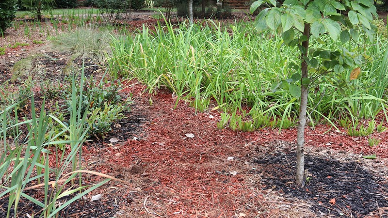 September 14:  I moved a few more straggler irises plants to give everything some more space.
