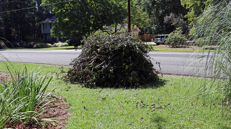 August 31:  Leaf and Limb collection was scheduled for the upcoming week in my neighborhood.  This meant it was time to get my pile ready.