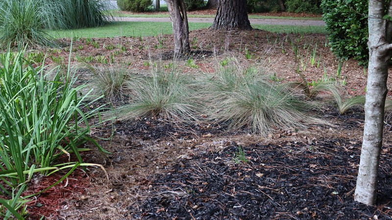 September 15:  The photo above gives a good idea of what I'm aiming for.  The small plants like the ornamental grasses will now be in front of the taller irises.