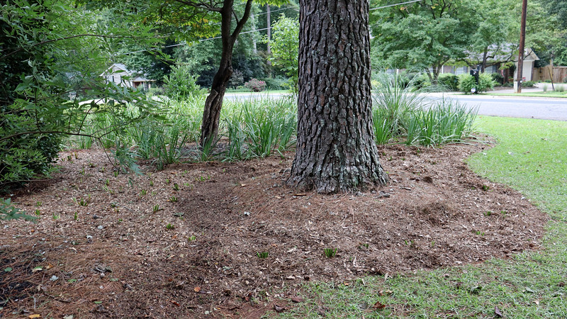 August 25:  Making homemade mulch has given my lawn mower a workout recently.
