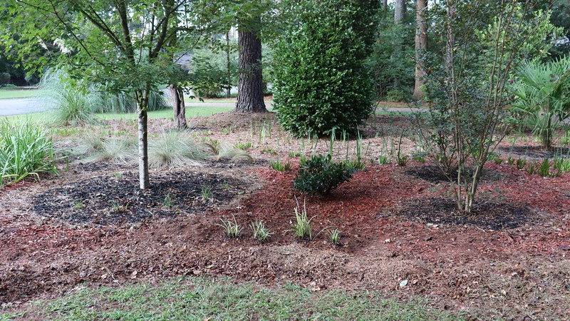 September 15:  I broke out the lawnmower and made more homemade mulch for a border.