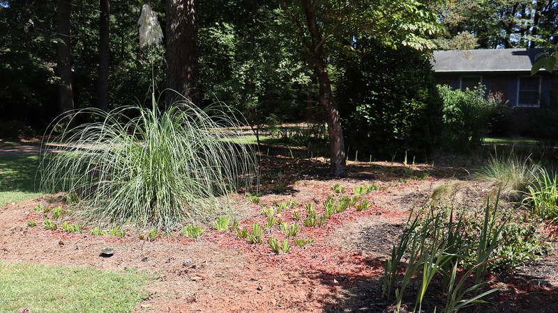 September 8:  With the exception of a straggler here and there, all of the irises on this side of the design will be staying in place.  The items on this side of the yard are all large and won't be affected by putting irises in front of them.