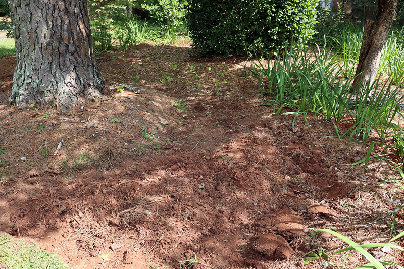 August 24:  I decided to remove all of the grass/weeds on this side of the design.  This was slightly easier than it sounds only because there isn't much grass in this area.