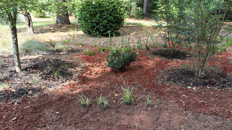 September 14:  I moved the four ornamental grass plants to the edge of the design seen in the photo above.