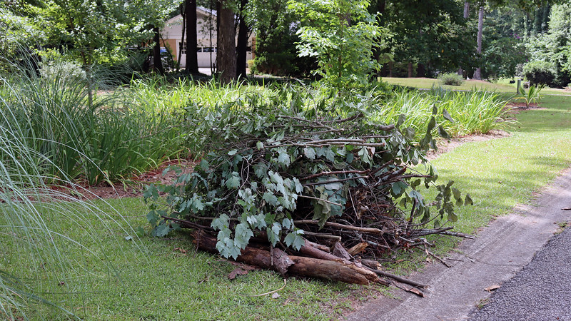 July 21:  The first part of this day was spent getting my pile ready for Leaf and Limb Collection, which was scheduled for the upcoming week in my part of the city.