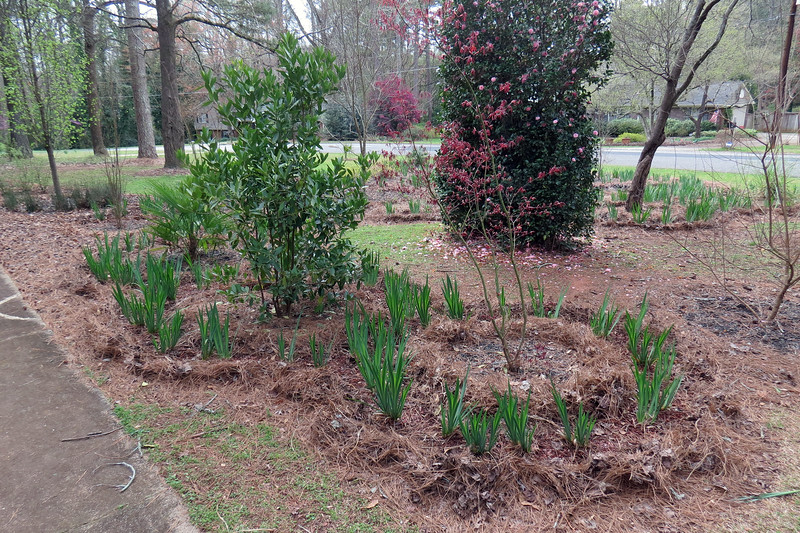 March 16:  I spent today doing some prep work for the annual spring mulch project.