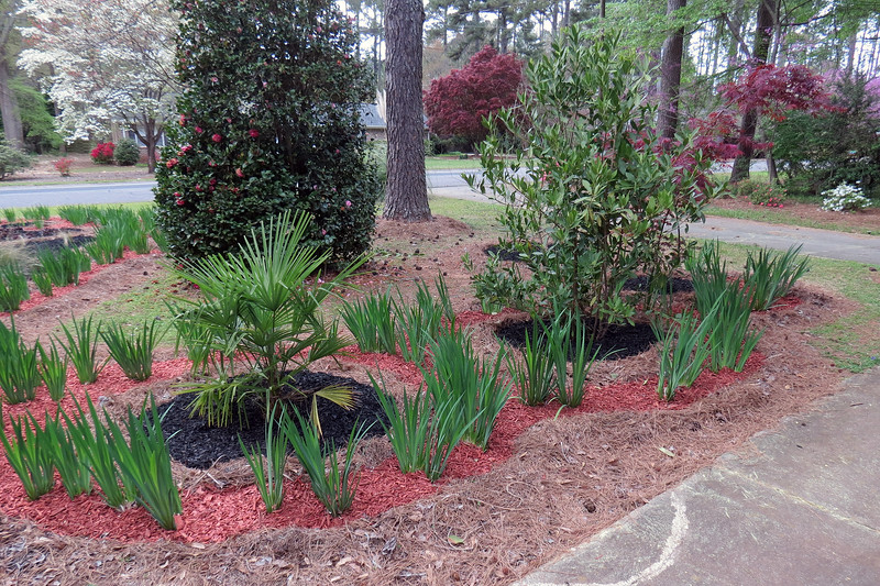 March 31:  Filling in the individual plant clusters with black mulch.