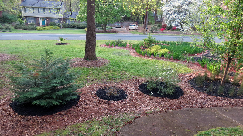 April 7:  Even though there is no iris path back here, the individual plant clusters still got black mulch.