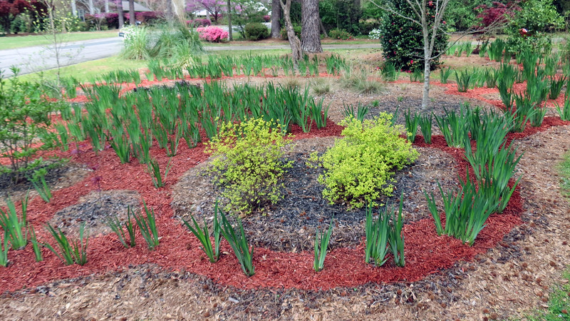 March 31:  With the red mulch path completed, the next step was to start filling in the individual plant clusters with black mulch.