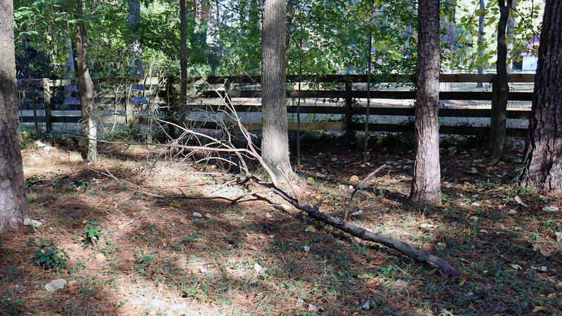 I actually had a small tree come down by the fence.
