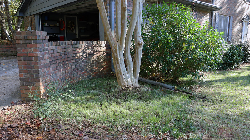 The ornamental grass that surrounds the large crape myrtle was getting quite tall and somewhat unruly.  So I cut it back for the end of the season, (since I now have a mower with working height adjustment !).