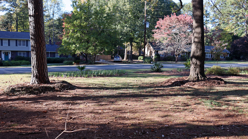 I added mulch around the two pine trees today.  Like I said earlier, I love my new mower !