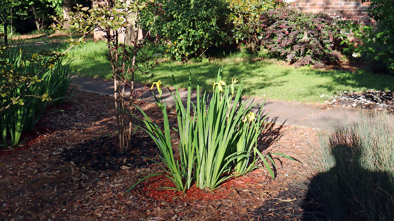 This used to be part of a large path of irises that engulfed the entire design.