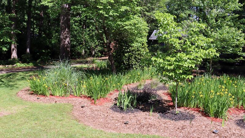 May 1:  It looks like the iris blooming season is peaking now.