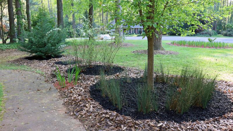 The back row plants all got black mulch.