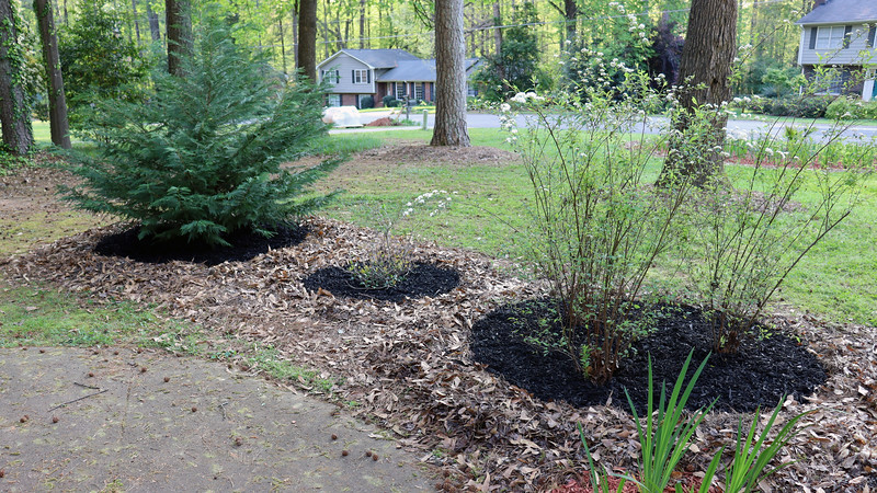 Removing the leaves and adding the black mulch really does make a tremendous visual difference.