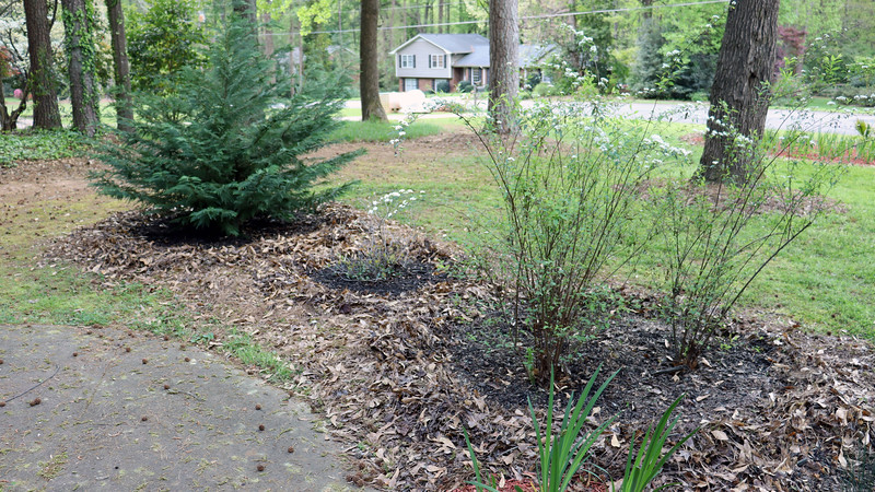I cleared everything out in preparation for the black mulch.
