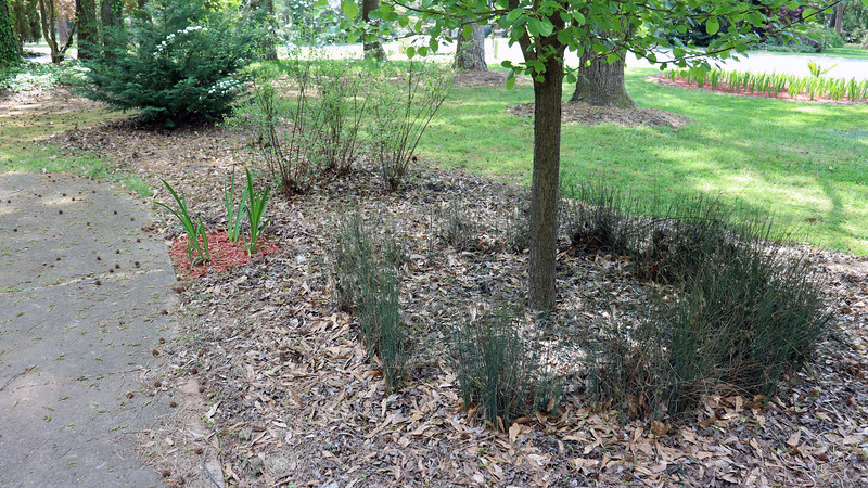On the schedule for today was to finish the annual spring mulch project.  I was thinking about trying a cedar mulch in the remaining areas.  But since the regular black mulch was on a 5-for-$10 sale, I went with that instead.  The pear tree, Reeves spireas, Eleanor Tabor Indian Hawthorn, and Leyland Cypress will all get black mulch just like in years past.