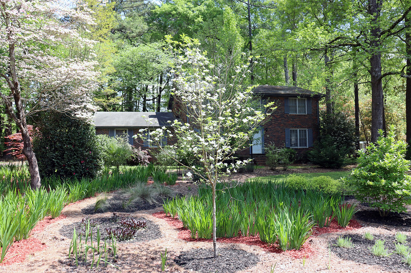 The Dogwood Cherokee Princess from April 2014 is looking better this year than it ever has.