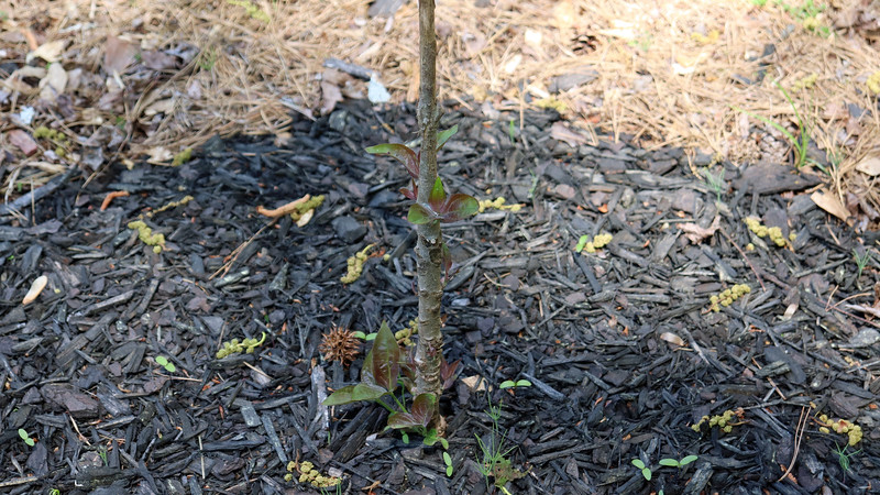 I'm seeing new growth at the base of the tree.  If it's going to grow, I'll leave it in place.