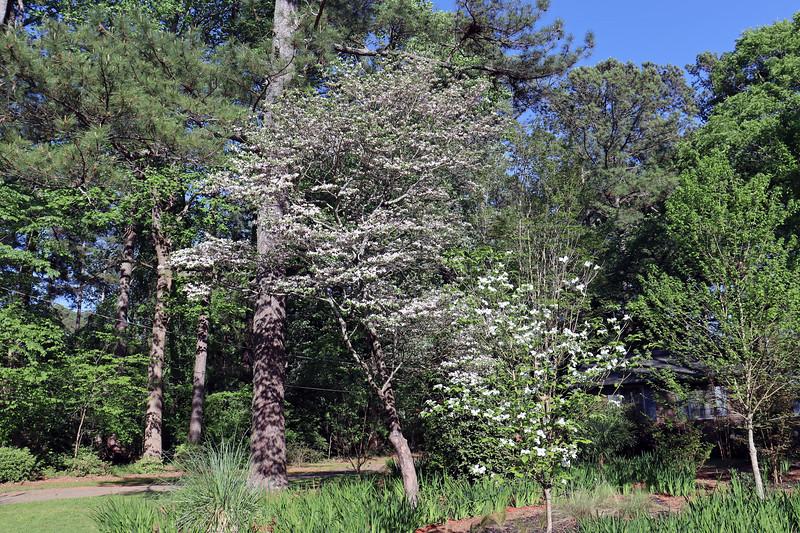 The dogwood trees look good.