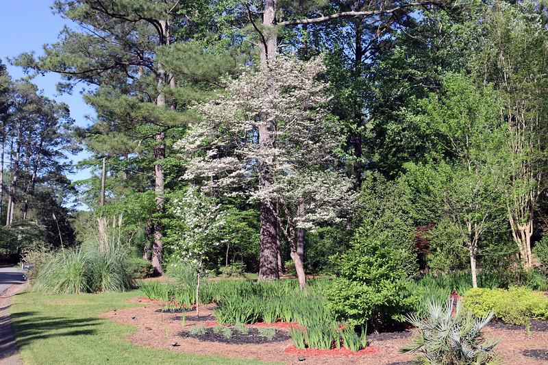 The dogwood trees still look great.