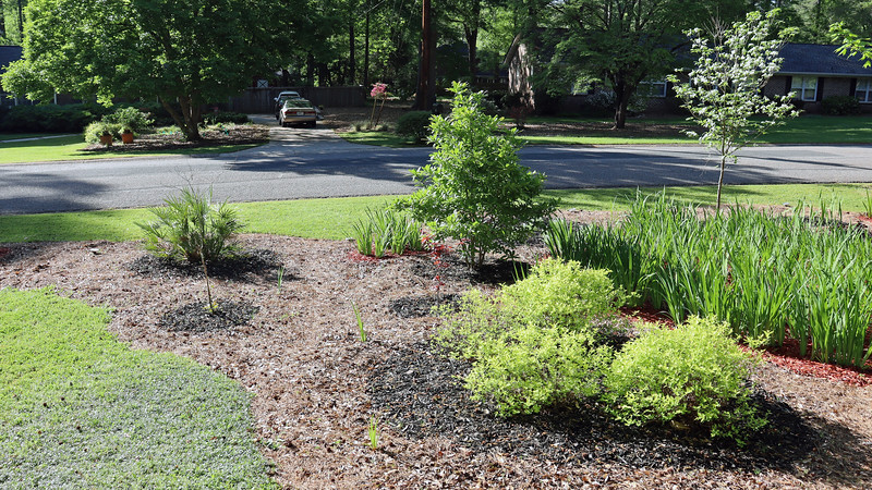 The new growth on the relocated dogwood tree seems to be expanding.