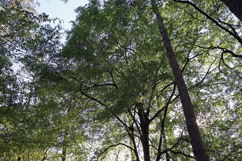 I love the large oak tree in my backyard !