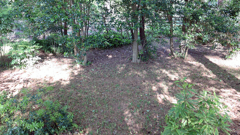 I ran the mower over half of the backyard today.