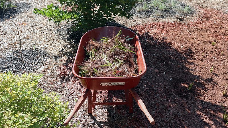 Wheelbarrow load number 5 wasn't quite as full as the others.  But that's ok.  I've got more neighbors lined up to provide homes for the remaining irises.