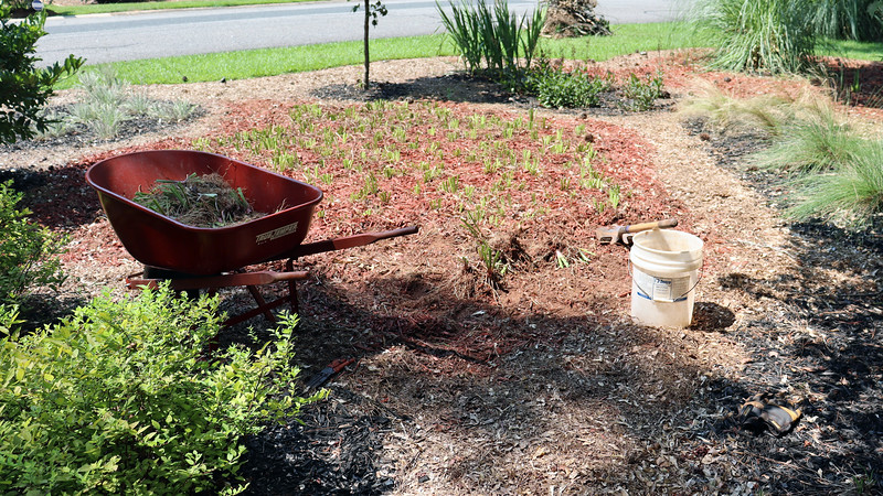 August 9:  I started with an empty wheelbarrow today.