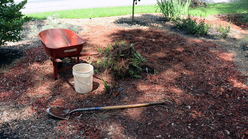 I began today with an empty wheelbarrow thanks to more neighbors who wanted irises for their yards during the past week.