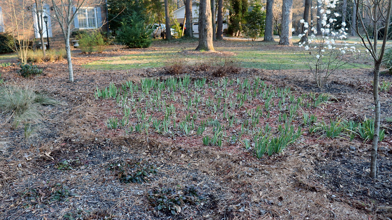 The center section of irises will also get red mulch just like in years past.